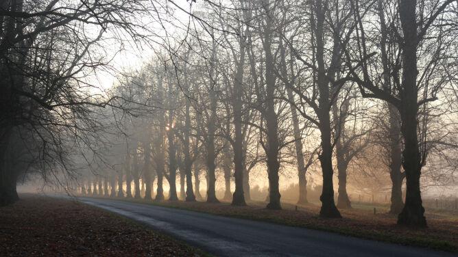 Mgły mogą być niebezpieczne. <br />Prognoza zagrożeń IMGW