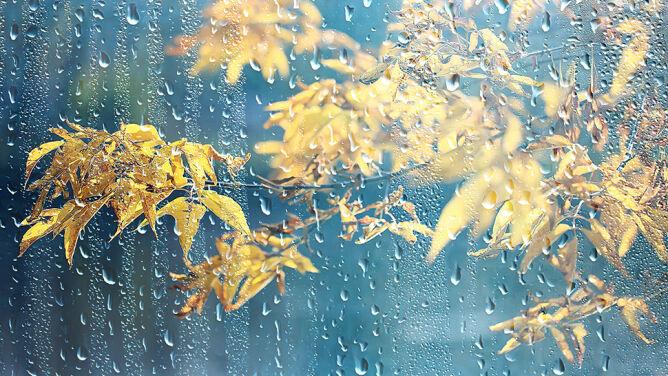 Pogoda na dziś: połowa kraju pochmurna i deszczowa