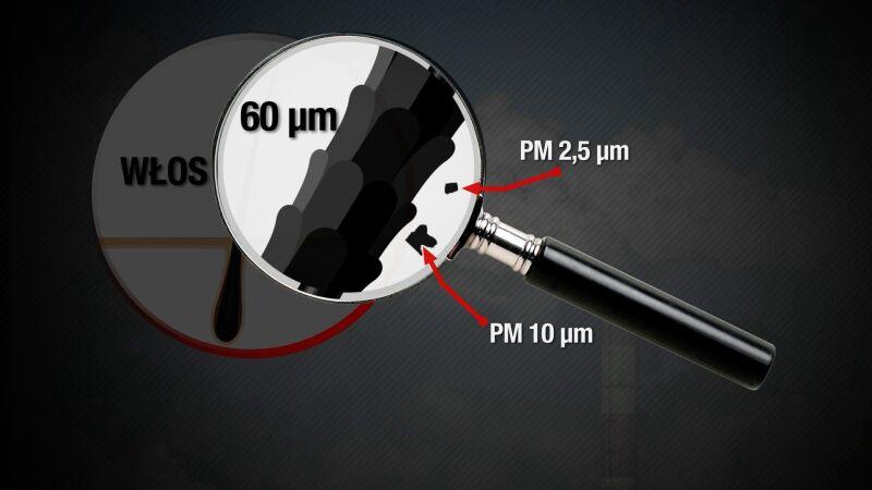 Rozmiar cząsteczek pyłów PM2,5 i PM10 w porównaniu do grubości ludzkiego włosa
